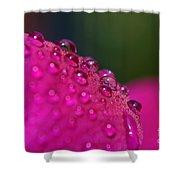 Perles Shower Curtain