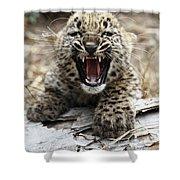Persian Leopard Cub Snarling Shower Curtain