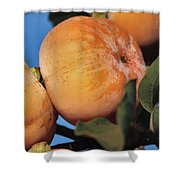 Persimmons Close Up Shower Curtain