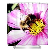 Persistence Into October Shower Curtain