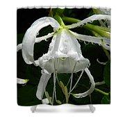 Peruvian Daffodil Shower Curtain