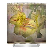 Peruvian Lily Framed Shower Curtain
