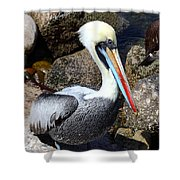 Peruvian Pelican Shower Curtain