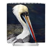 Peruvian Pelican Portrait Shower Curtain