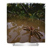 Peruvian Pinktoe Tarantula Peru Shower Curtain
