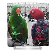 Pet Parrots In A Cafe Shower Curtain