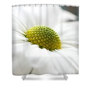 Petal Froth Shower Curtain