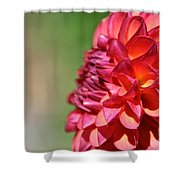 Petal Perfection Shower Curtain