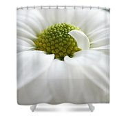 Petal Pillow Shower Curtain