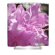 Petal Pink By Jrr Shower Curtain