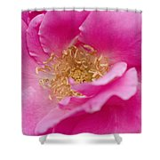 Petal Pink Shower Curtain