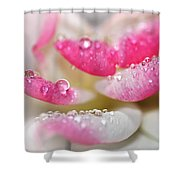 Petals And Droplets Shower Curtain