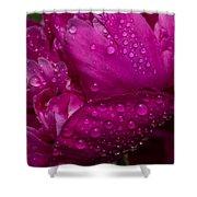 Petals And Drops I Shower Curtain