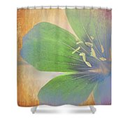 Petals Of Color Shower Curtain
