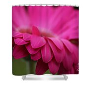 Petals Pink Shower Curtain