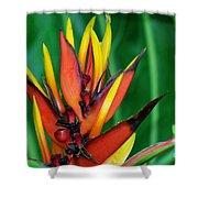 Petals Up Shower Curtain