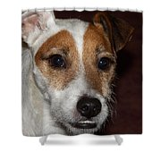 Petey Dog Jack Russell Shower Curtain