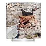 Petrified Tree Trunk Shower Curtain