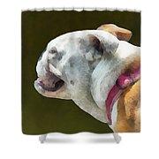Pets - English Bulldog Profile Shower Curtain