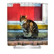 Pets - Tabby Cat By Red Door Shower Curtain