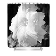 Petunia After Rain Shower Curtain
