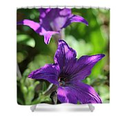Petunia Hybrid From The Sparklers Mix Shower Curtain
