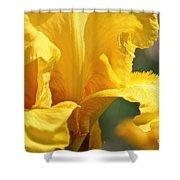 Phaeton's Close Up Shower Curtain