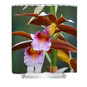 Phaius Tankervilliae Orchid Shower Curtain