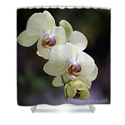 Phal Ming Chao Dancer 0754 Shower Curtain