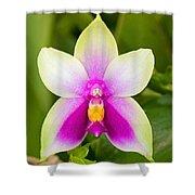 Phalaenopsis Bellina Shower Curtain