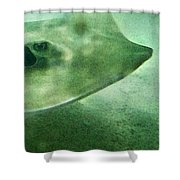 Phantom - Manta Ray Art By Sharon Cummings Shower Curtain