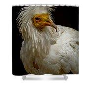 Pharaoh's Chicken Shower Curtain