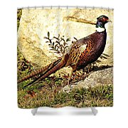 Pheasant Shower Curtain