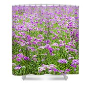 Phield Of Phlox Shower Curtain