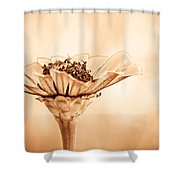 Phillies Need A Win Shower Curtain by Trish Tritz