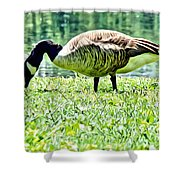 Philly Goose In The Grass Shower Curtain