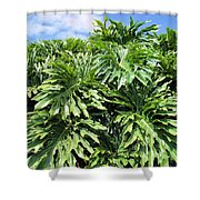 Philodendron 1 Shower Curtain