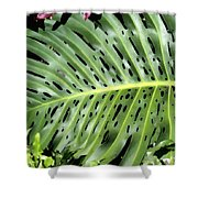 Philodendron 6 Shower Curtain