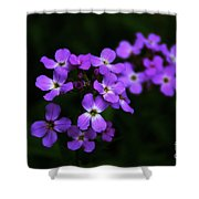 Phlox Blossoms Shower Curtain