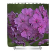 Phlox Nicky Shower Curtain