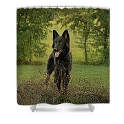 Phoenix - Early Evening Shower Curtain