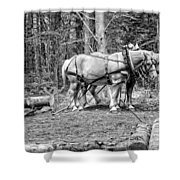 Photograph Of Horses Pulling Logs In Maine Forest Shower Curtain