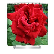 Photograph Reddest Of Roses Shower Curtain