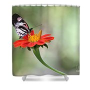Piano Wings Butterfly Shower Curtain