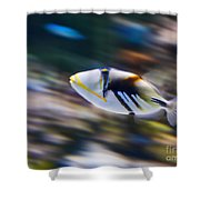 Picasso - Lagoon Triggerfish Rhinecanthus Aculeatus Shower Curtain