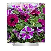 Pick Purple Shower Curtain
