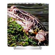 Pickerel Frog Shower Curtain