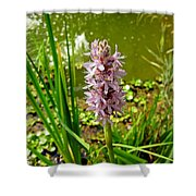 Pickerel Weed Plant Shower Curtain