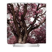 Picnic Rose  Shower Curtain
