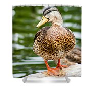 Picture Perfect - Mallard Duck Shower Curtain